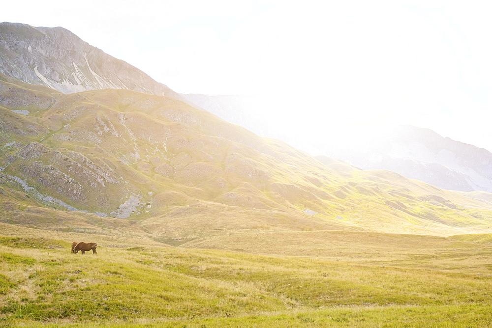 Italy, Abruzzo, Gran Sasso e Monti della Laga National Park, Horses in plateau Campo Imperatore at sunset