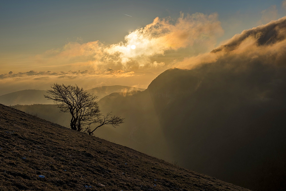 Italy, Umbria, Apennines, Sunrise on a lonely tree on mountain Motette
