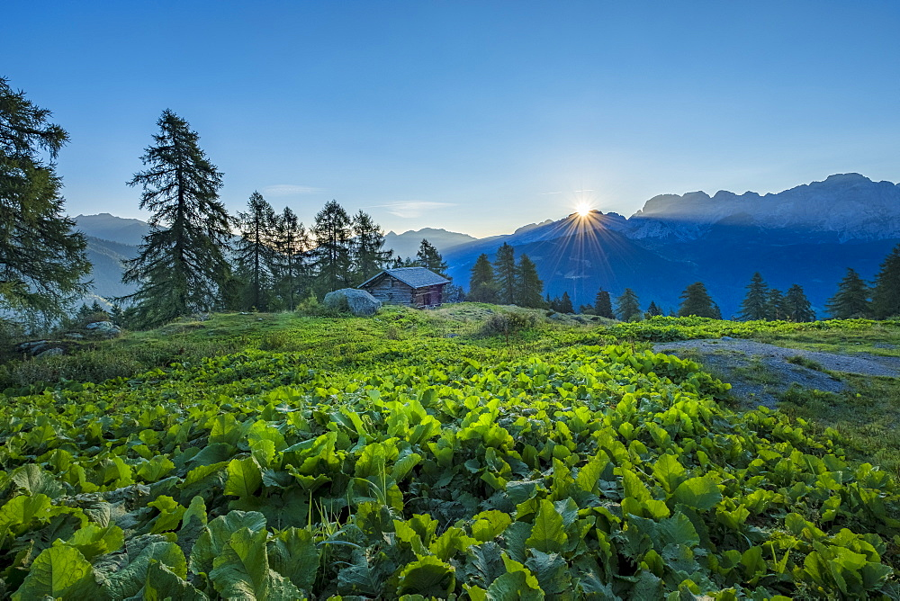 Brenta mountain range at sunrise, Rendena Valley, Trentino, Italy, Europe - 1264-90