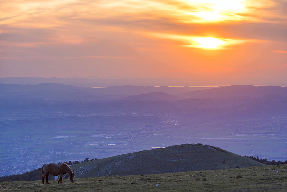 Horse in the fields, Mount Subasio, Umbria, Italy, Europe - 1264-96