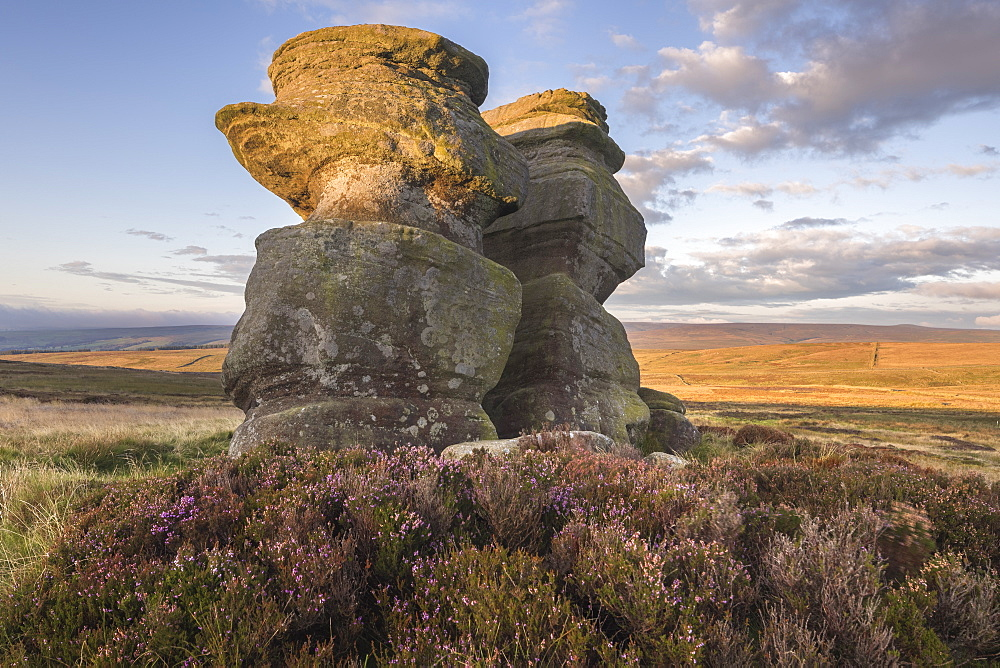 Jenny Twigg and her daughter Tibb. Gritstone rock formations on Fountains Earth Moor, Nidderdale, North Yorkshire, UK - 1266-154