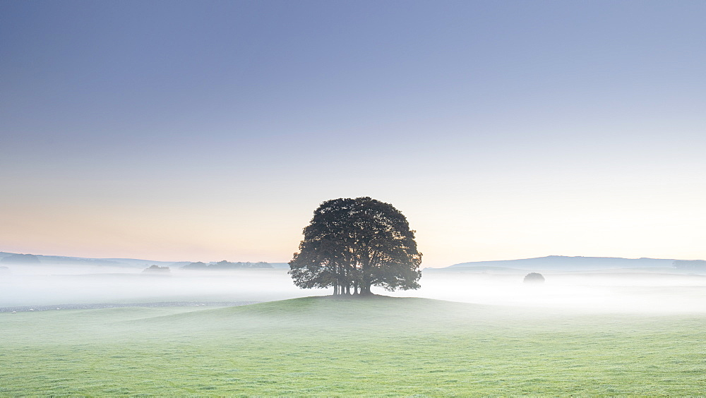 Copse of trees and low lying mist at Airton near Malham, Malhamdale, Yorkshire Dales, Yorkshire, England, United Kingdom, Europe - 1266-158