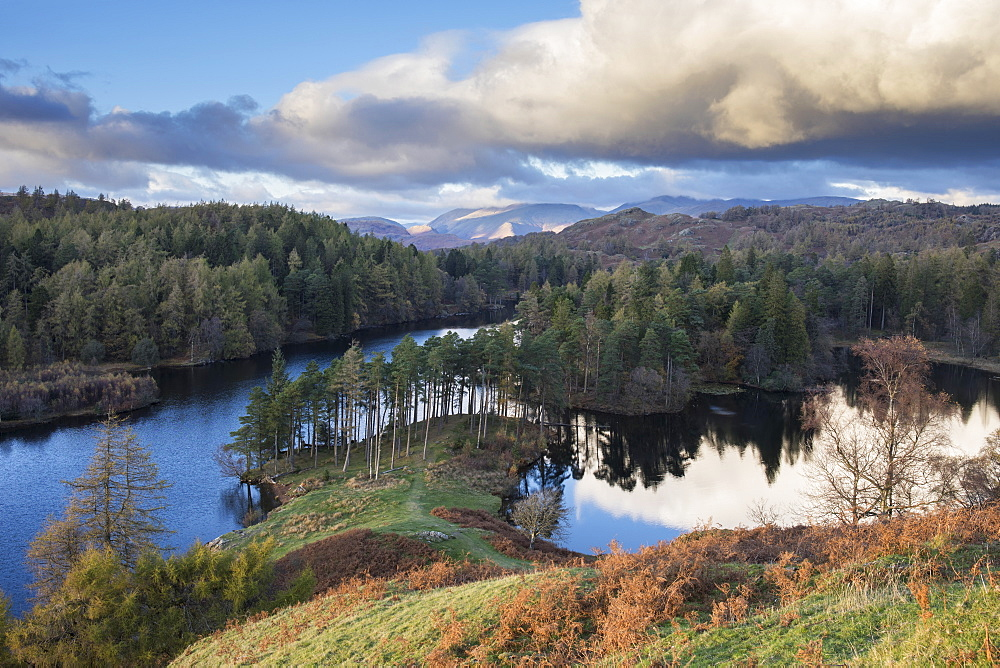 Autumn colours and low angled evening sunlight at Tarn Hows, Lake District National Park, UNESCO World Heritage Site, Cumbria, England, United Kingdom, Europe - 1266-170