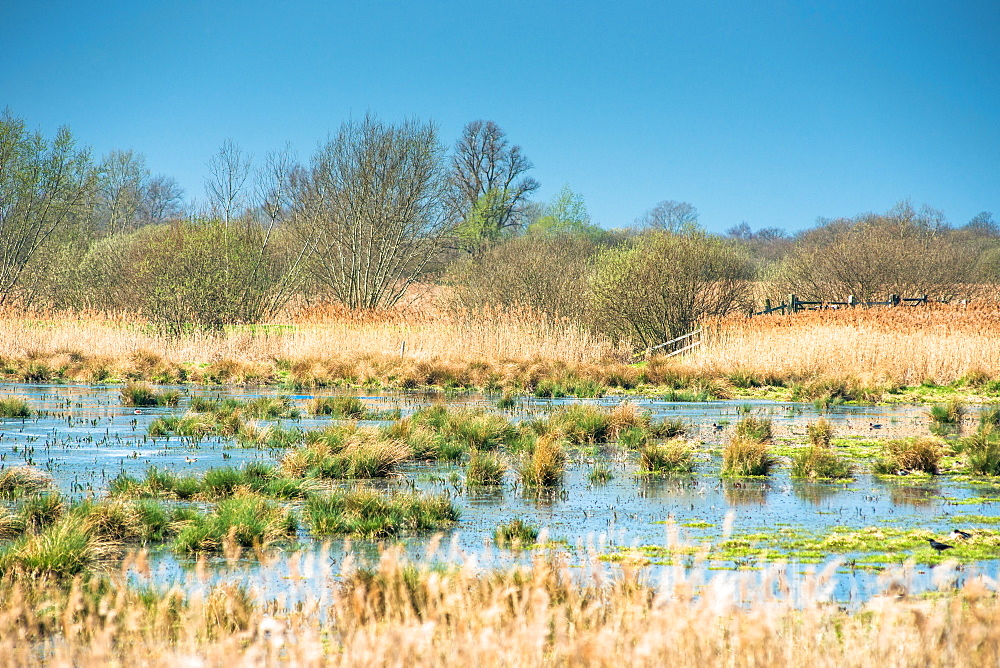 Wetlands at Wicken Fen National Nature Reserve, Cambridgeshire, East Anglia, England, United Kingdom, Europe
