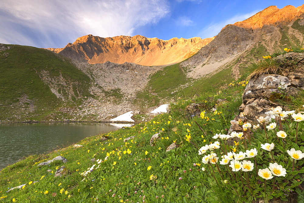 Summer blooms at Lej da Prastinaun, Arpiglia Valley(Val Arpiglia), Engadin Valley, Graubünden, Switzerland, Europe. - 1269-119
