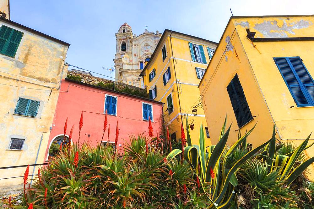 Flowers among colored houses of Cervo, Imperia province, Liguria, Italy, Europe. - 1269-128