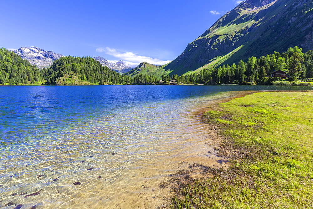 Clear water at Lake Cavloc, Forno Valley, Maloja Pass, Engadine, Graubunden, Switzerland, Europe - 1269-199
