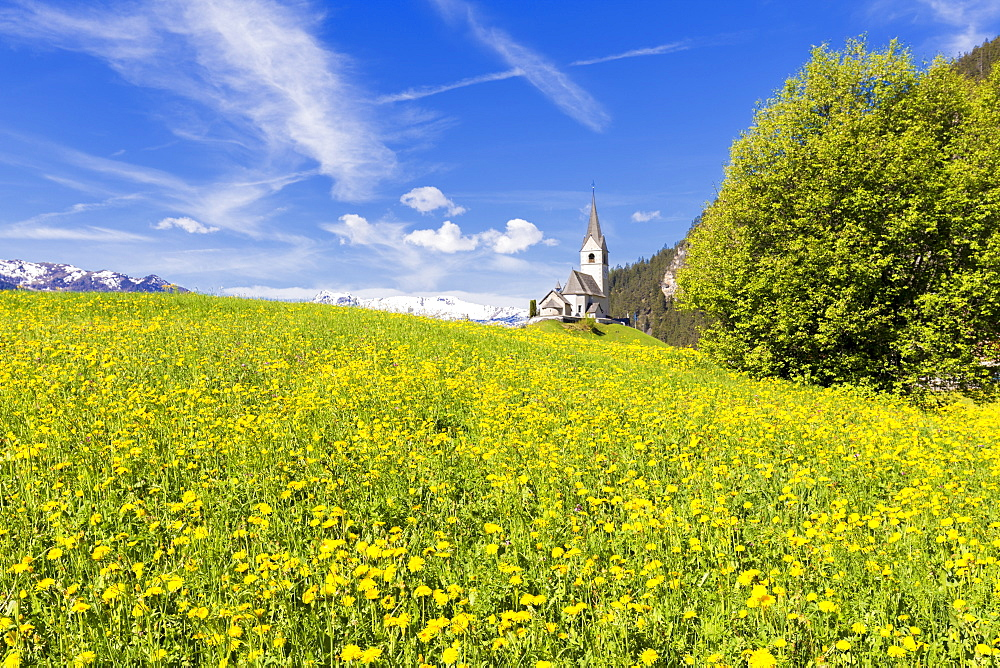 Summer flowers and traditional church of Davos Wiesen, Parc Ela, Prettigau/Davos, Graubunden, Switzerland, Europe - 1269-207