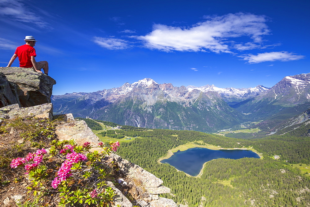 Lake Palu and Mount Disgrazia viewed from above with rhododendrons in flower, Valmalenco, Valtellina, Lombardy, Italy, Europe