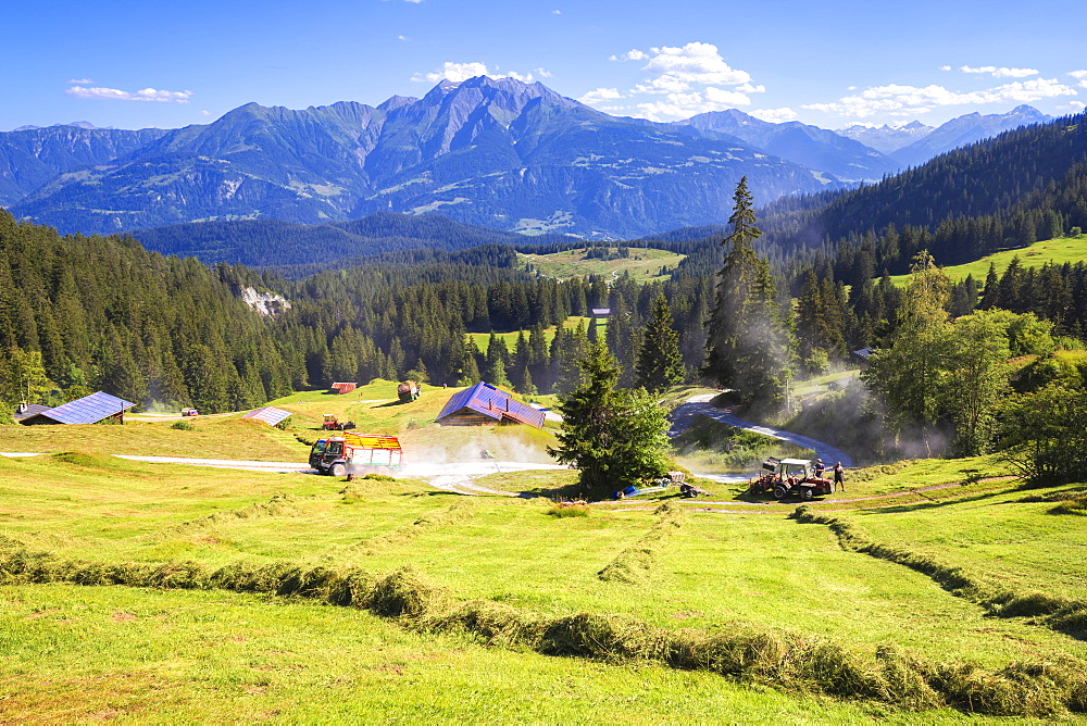 Summer hay, Flims, District of Imboden, Canton of Grisons (Graubunden), Switzerland, Europe