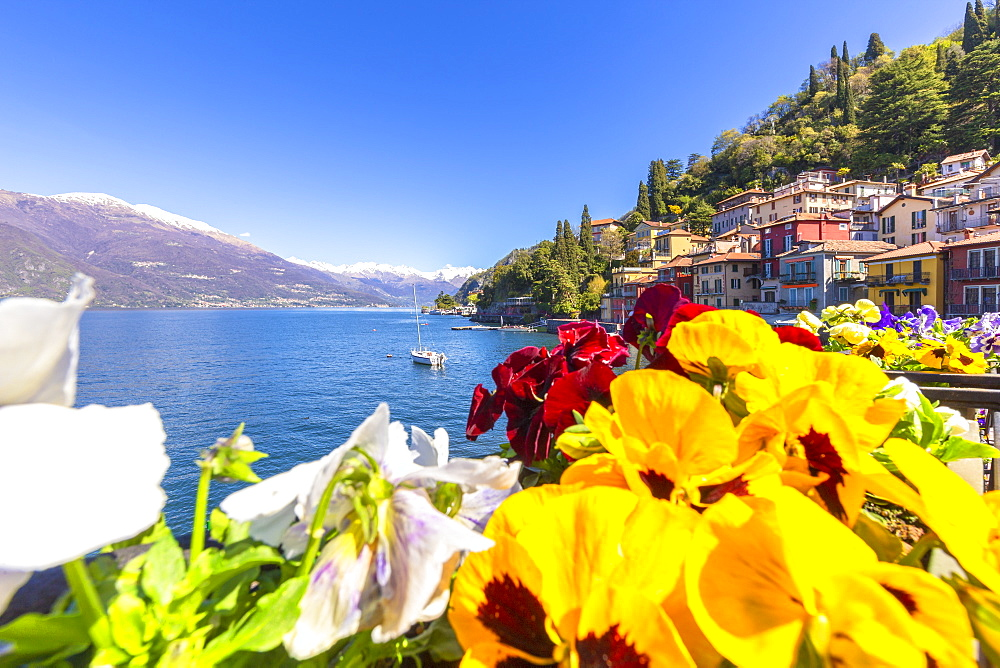 Colourful flowering on the lake. Varenna, Province of Lecco, Como Lake, Lombardy, Italy, Europe. - 1269-259