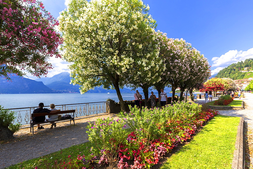 Blooms on the lake side of Bellagio, Province of Como, Como Lake, Lombardy, Italy, Europe. - 1269-260