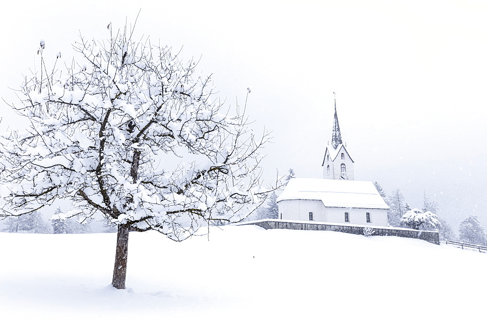 Church of Versam among the snow-laden trees, Versam, Safiental, Surselva, Graubunden, Switzerland, Europe