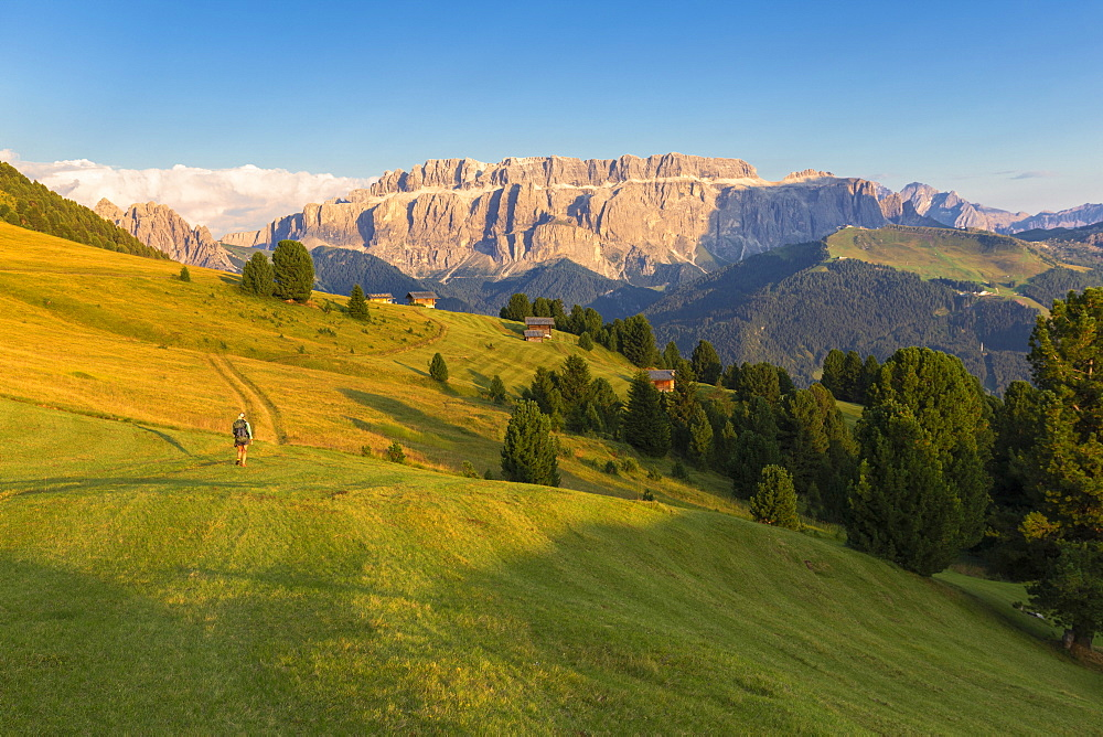 Hiker walks in the pasture with Sella Group in the background, Gardena Valley, South Tyrol, Dolomites, Italy, Europe - 1269-302