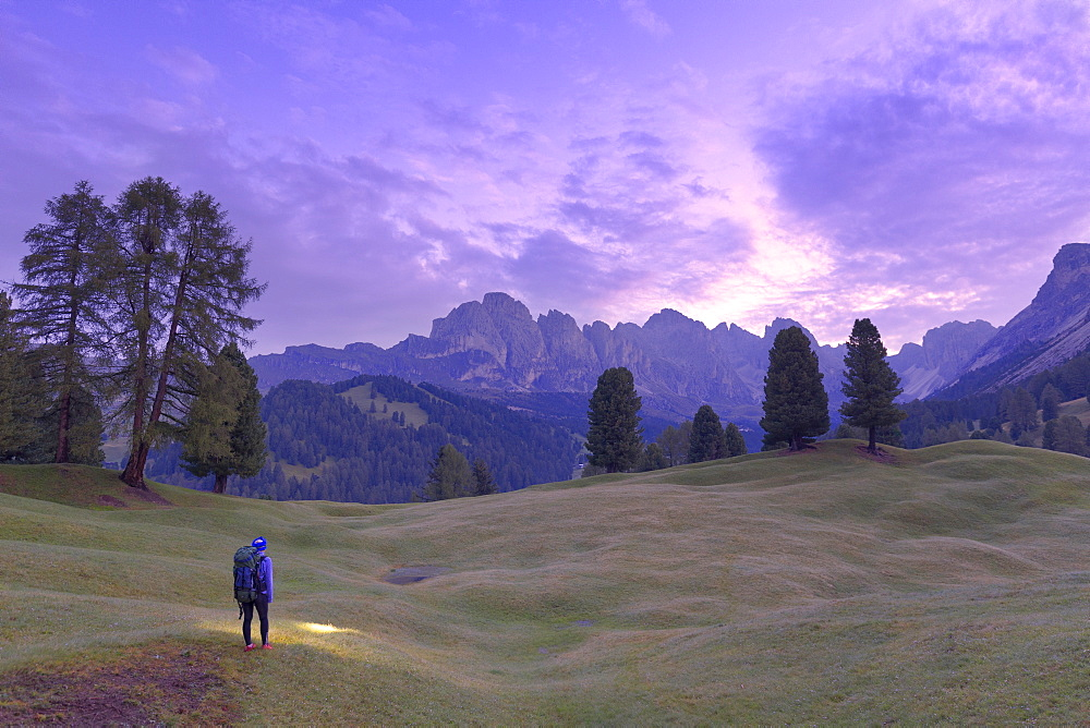 Hiker looks pink light of dusk with Odle group in the background. Selva, Gardena Valley, South Tyrol, Dolomites, Italy, Europe. - 1269-309