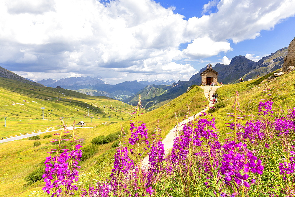 Flowers at Pordoi Pass Chapel, Pordoi Pass, Fassa Valley, Trentino, Dolomites, Italy, Europe