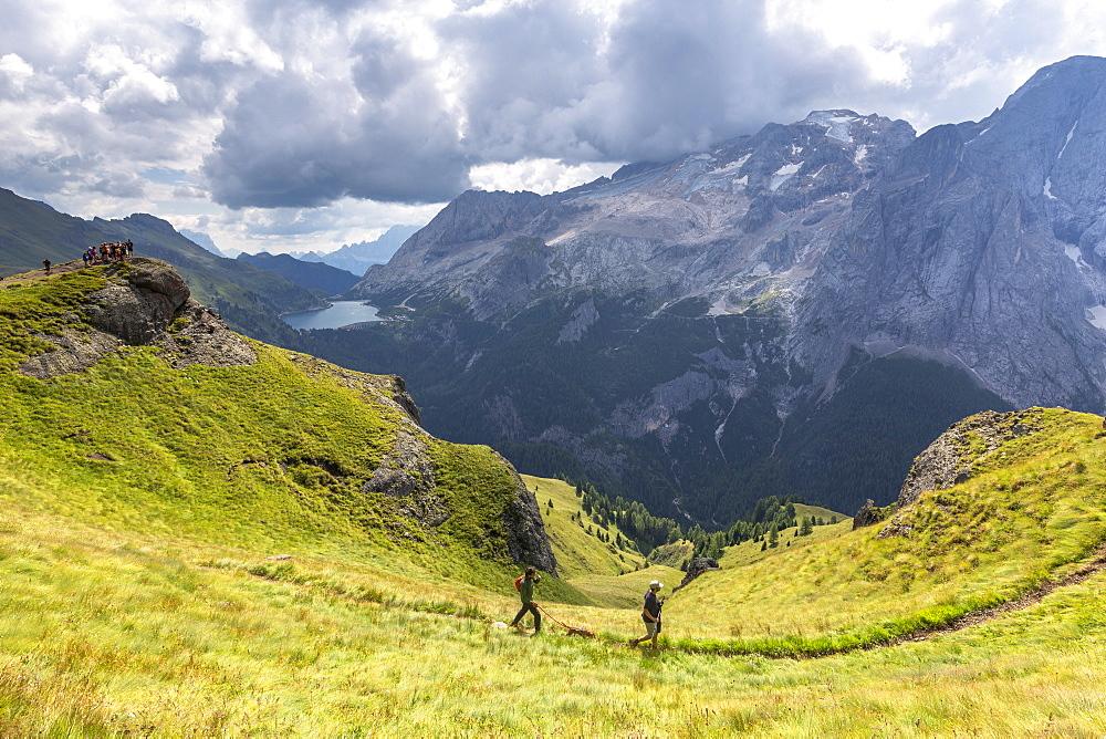 Hikers walk on Viel del Pan Path near Pordoi Pass, Fassa Valley, Trentino, Dolomites, Italy, Europe