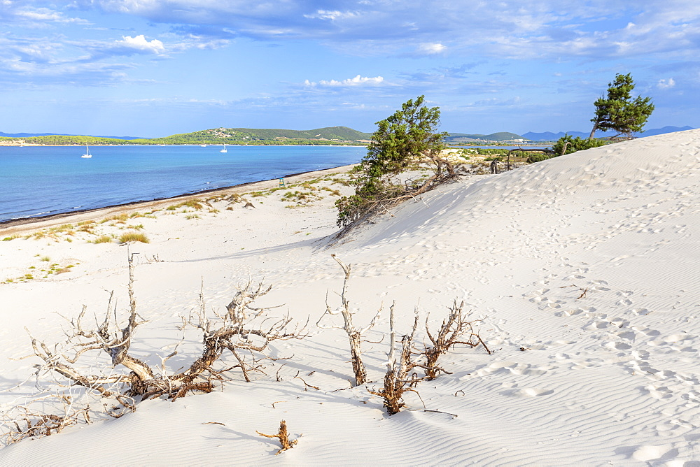 Sea from a sand dune of Is Arenas Biancas, Teulada, Cagliari province, Sardinia, Italy, Mediterranean, Europe - 1269-385