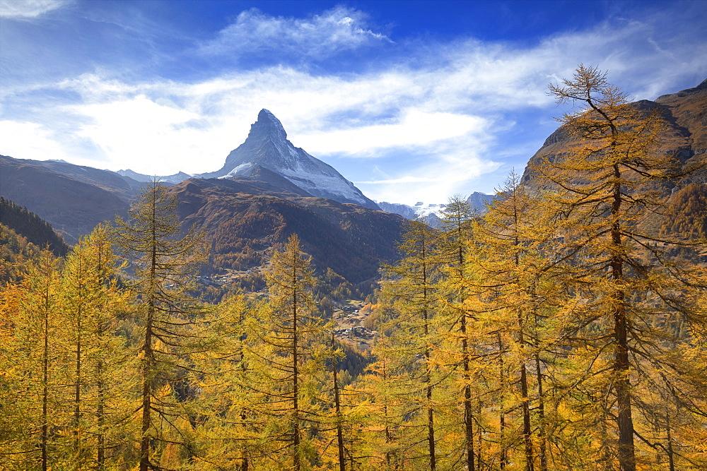 Colourful trees in autumn with Matterhorn in the background. Zermatt, Mattertal, Canton of Valais, Switzerland, Europe