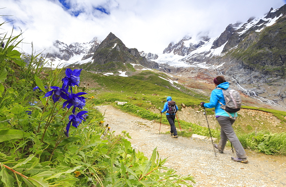 Transit of hikers with Aquilegia flowers in the foreground. Elisabetta Hut, Veny Valley, Courmayeur, Aosta Valley, Italy, Europe
