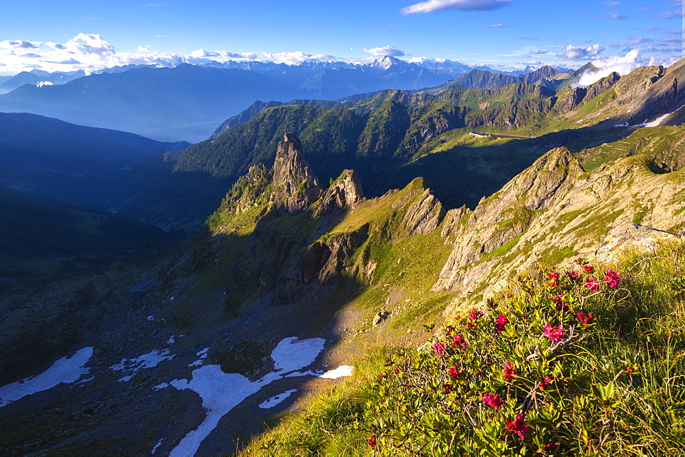 Rhododendrons flowering with Rhaetian Alps in the background, Valgerola, Orobie Alps, Valtellina, Lombardy, Italy, Europe - 1269-488