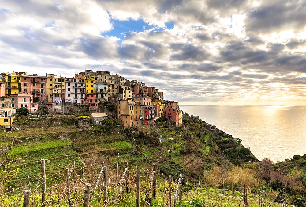 Colourful houses of Corniglia at sunset, Cinque Terre, UNESCO World Heritage Site, Liguria, Italy, Europe - 1269-498
