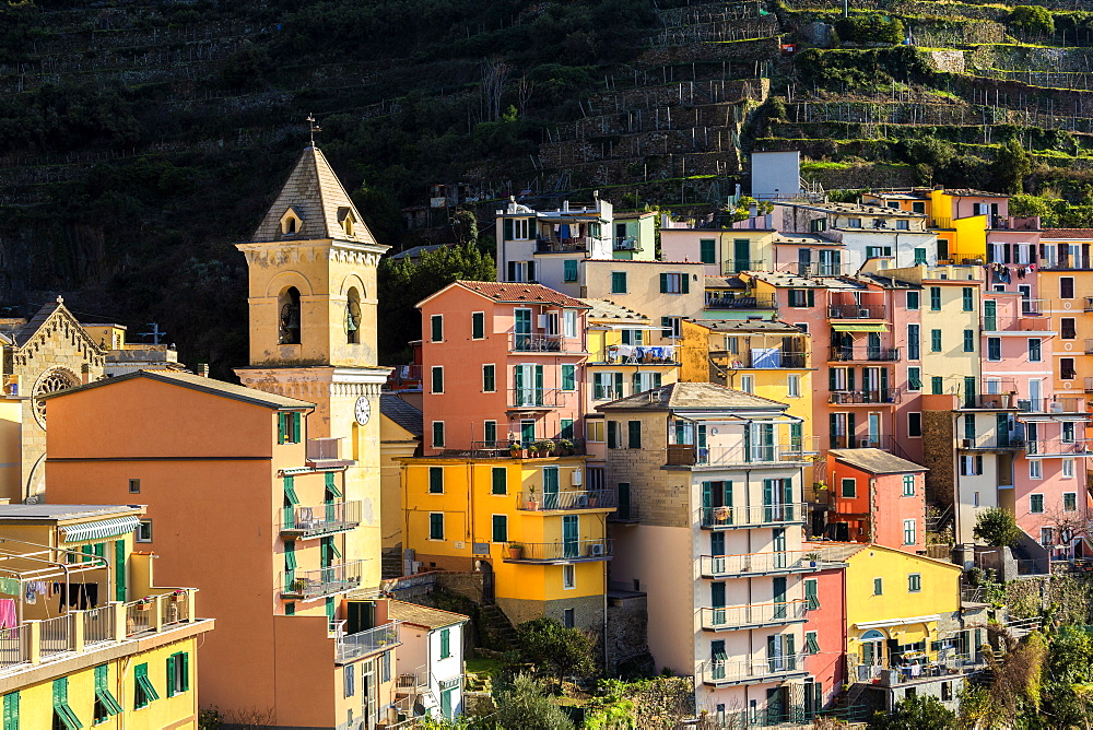 Church and traditional houses of Manarola, Cinque Terre, UNESCO World Heritage Site, Liguria, Italy, Europe - 1269-504