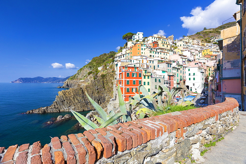 Colourful village of Riomaggiore, Cinque Terre, UNESCO World Heritage Site, Liguria, Italy, Europe - 1269-512