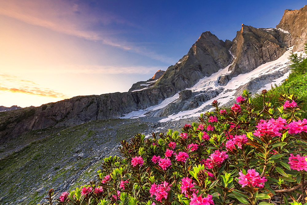 Flowering rhododendrons with the famous Pizzo Badile in the background at sunrise, Bregaglia valley, Graubunden, Switzerland, Europe - 1269-619