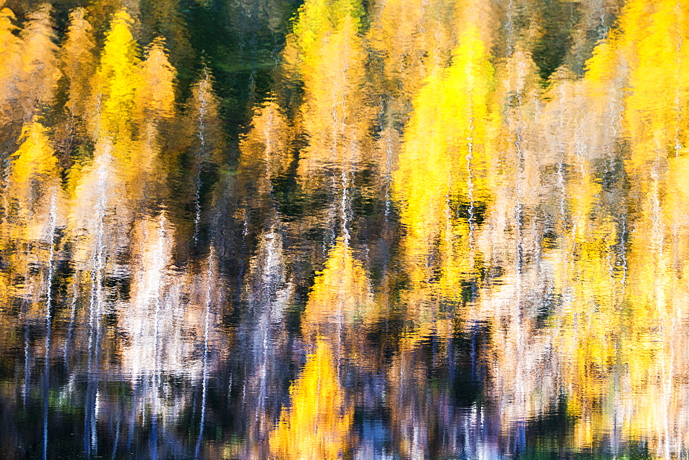 Yellow larches reflected in the water of the lake, Azzurro Lake, Valchiavenna, Valtellina, Lombardy, Italy, Europe - 1269-656