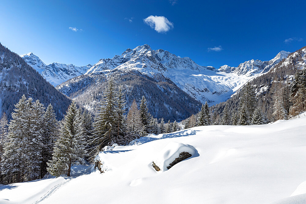 Winter landscape after snowfall with view of the group of Disgrazia, Chiareggio, Valmalenco, Valtellina, Lombardy, Italy, Europe - 1269-666
