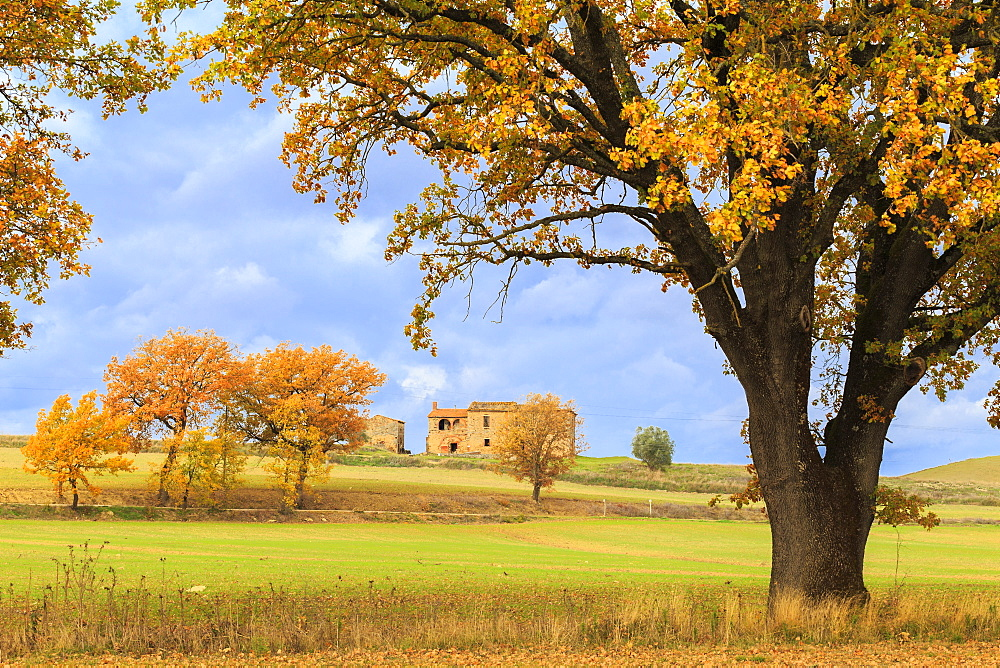 Isolated cottage in the Tuscan countryside during autumn, Asciano, Val d'Orcia, UNESCO World Heritage Site, Siena province, Tuscany, Italy, Europe - 1269-78