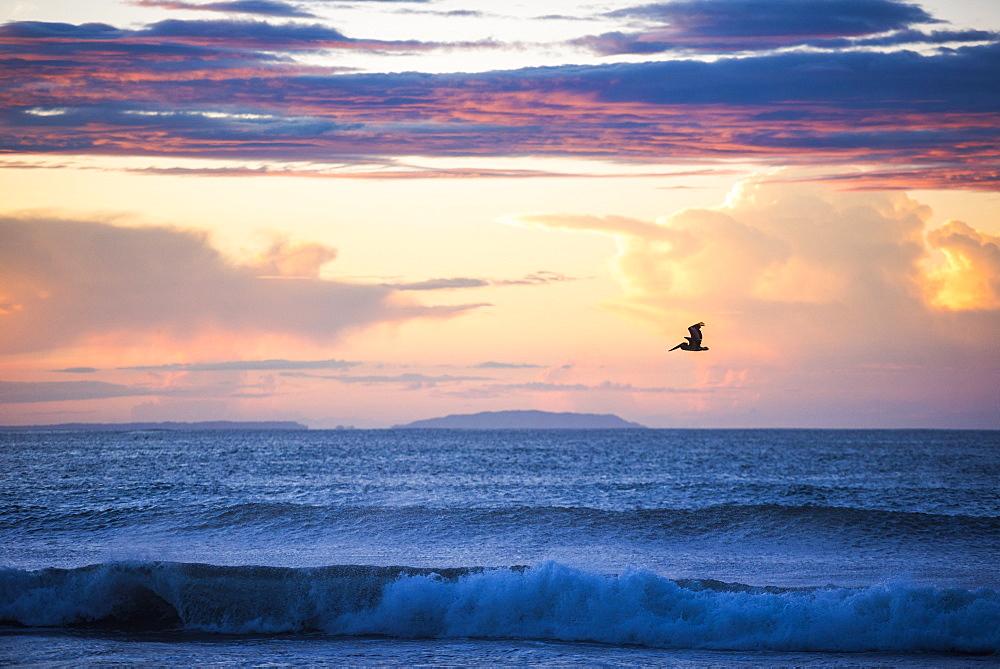 Pelican at Playa Buena Vista Beach at sunrise, Guanacaste Province, Costa Rica, Central America - 1272-106