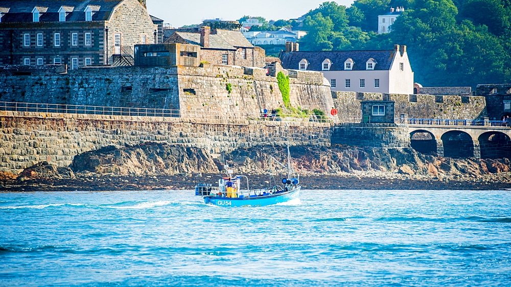 Traditional Guernsey crab and lobster boat coming into St. Peter Port Harbour, passing Castle Cornet, Guernsey, Channel Islands, United Kingdom, Europe