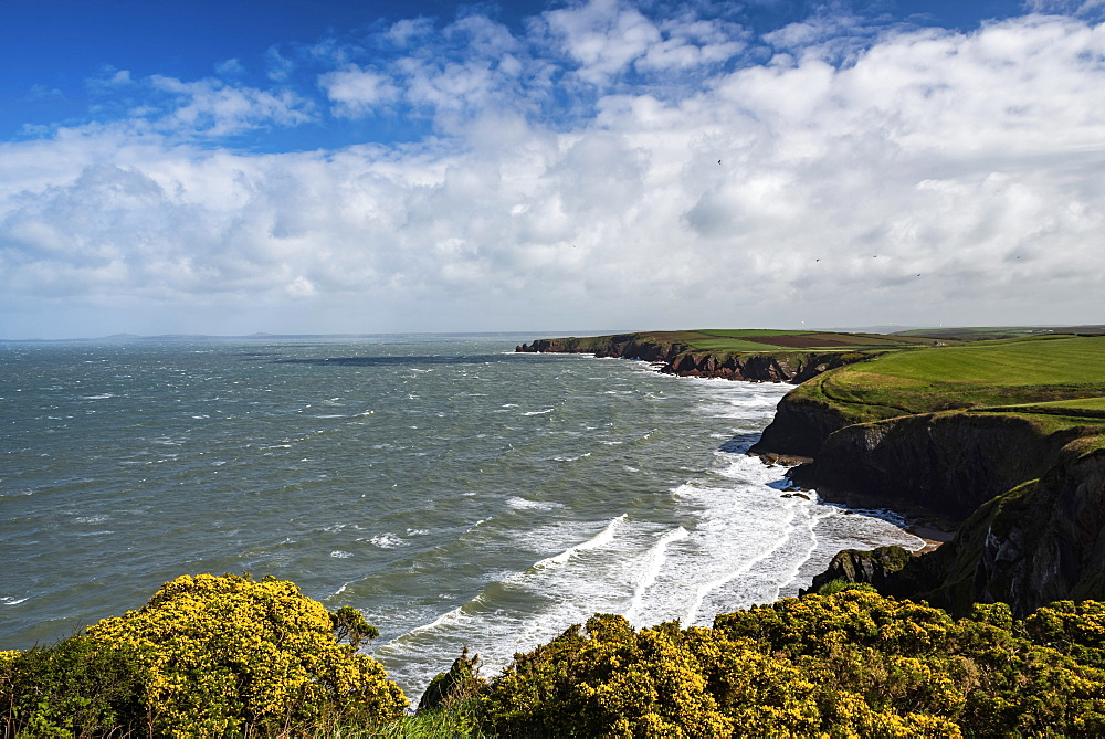 Pembrokeshire Coast National Park, seen near Marloes and St Brides, Wales, United Kingdom