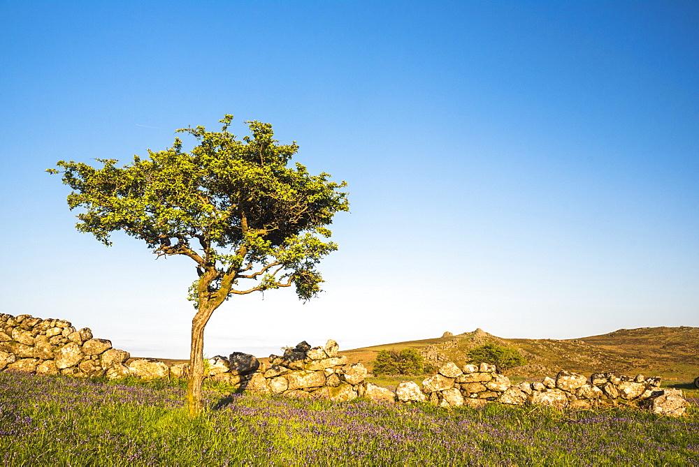 Dartmoor landscape, Devon, England, United Kingdom - 1272-62