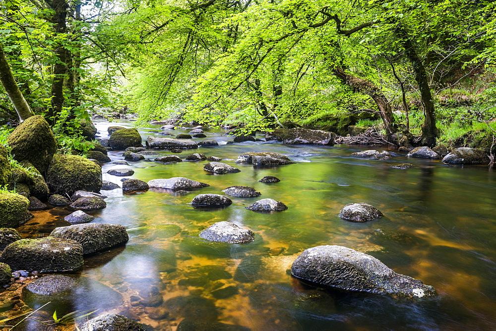 River in Dartmoor, Devon, England, United Kingdom, Europe