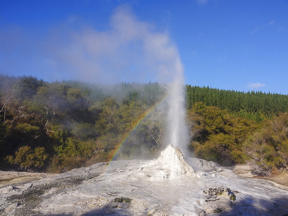 Lady Knox Geyser eruption with rainbow, Waiotapu, North Island, New Zealand, Pacific