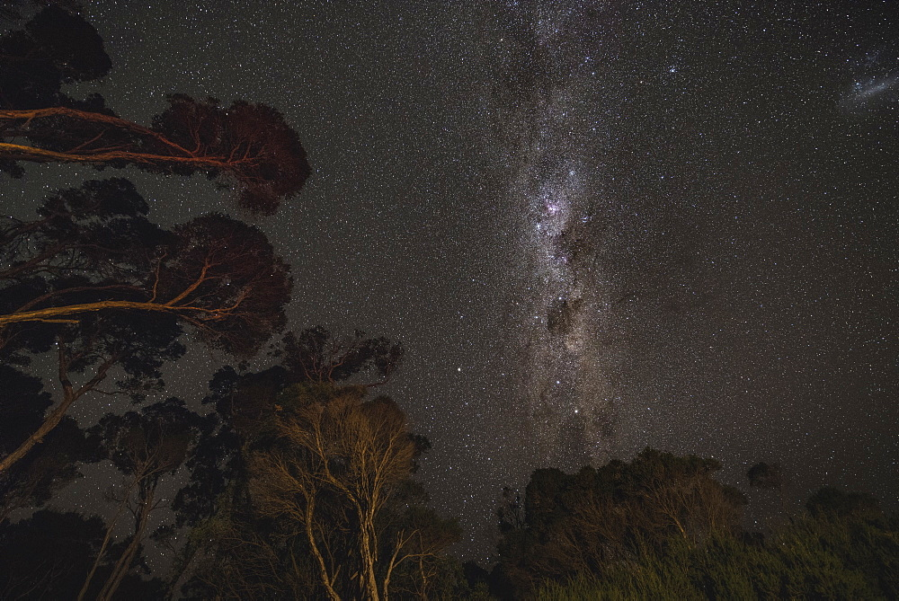 Milky Way rising above Australian forest. Victoria, Australia, Pacific