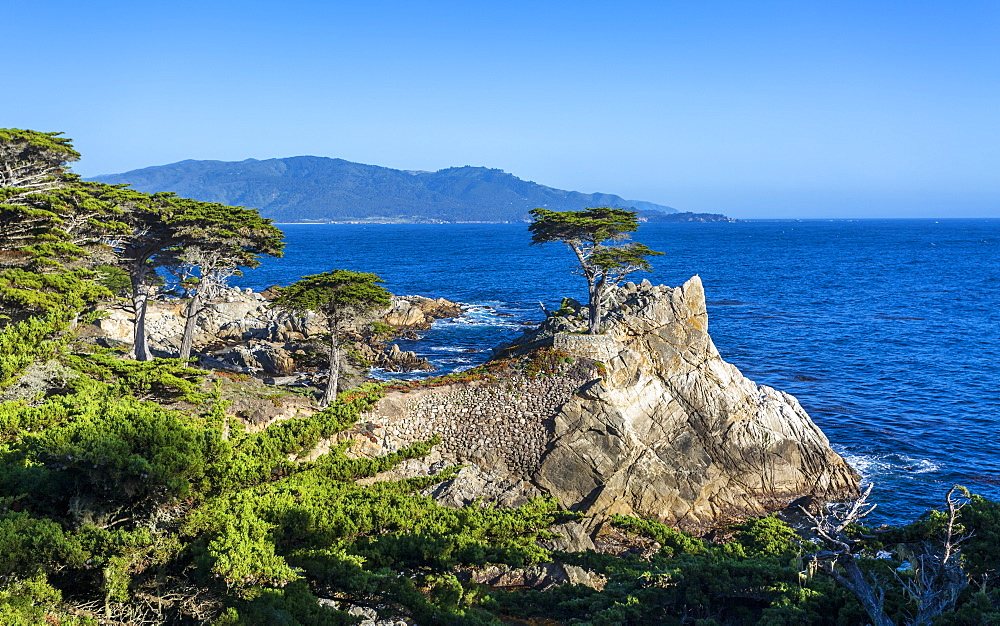 Carmel Bay, Lone Cypress at Pebble Beach, 17 Mile Drive, Peninsula, Monterey, California, United States of America, North America