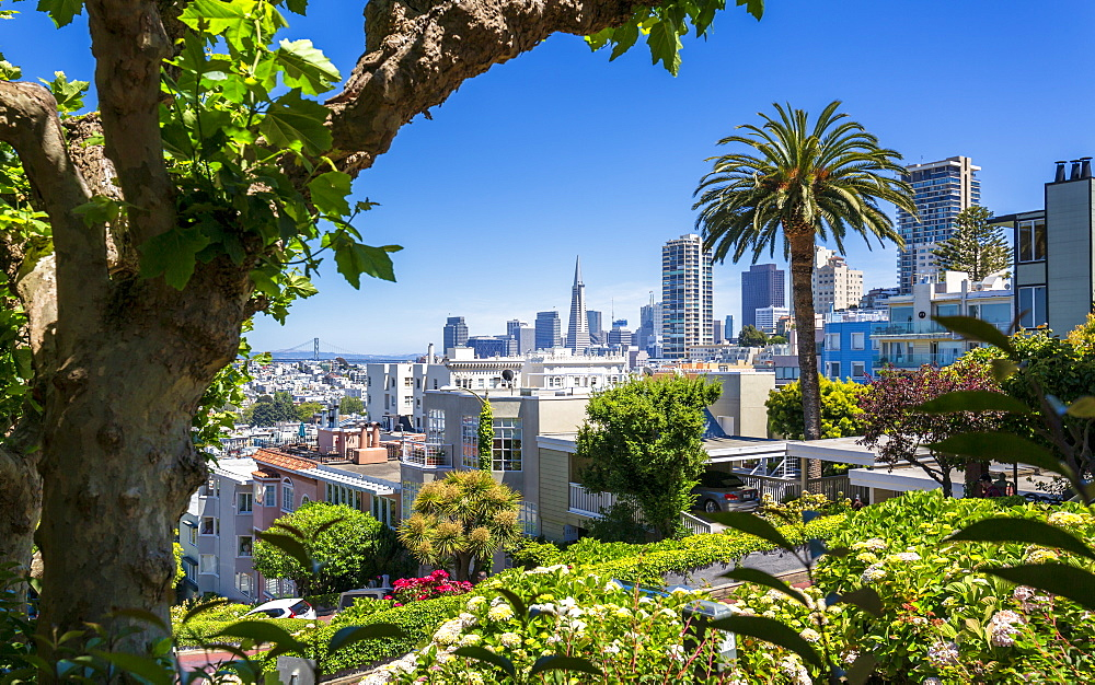 Downtown San Francisco with the Transamerica Pyramid from Lombard Street, San Francisco, California, United States of America, North America