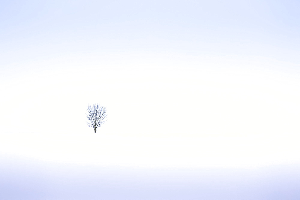 Lonely tree, winter snow scene, Aldbury, Hertfordshire, England, United Kingdom, Europe - 1282-9