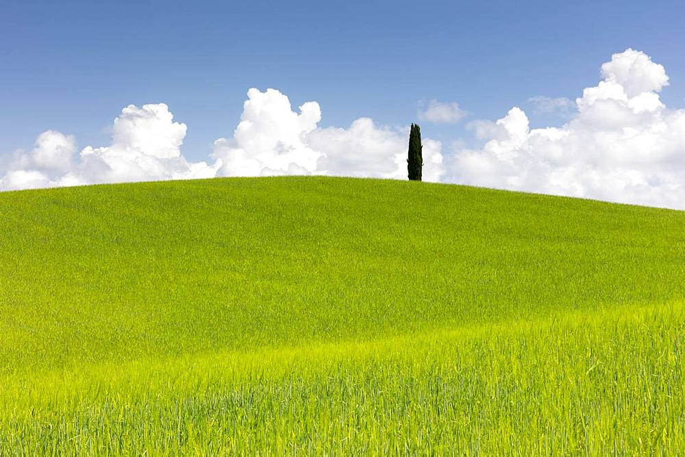 Green fields, Cypress trees and blue sky in Val d'Orcia, UNESCO World Heritage Site, Tuscany, Italy, Europe - 1284-114