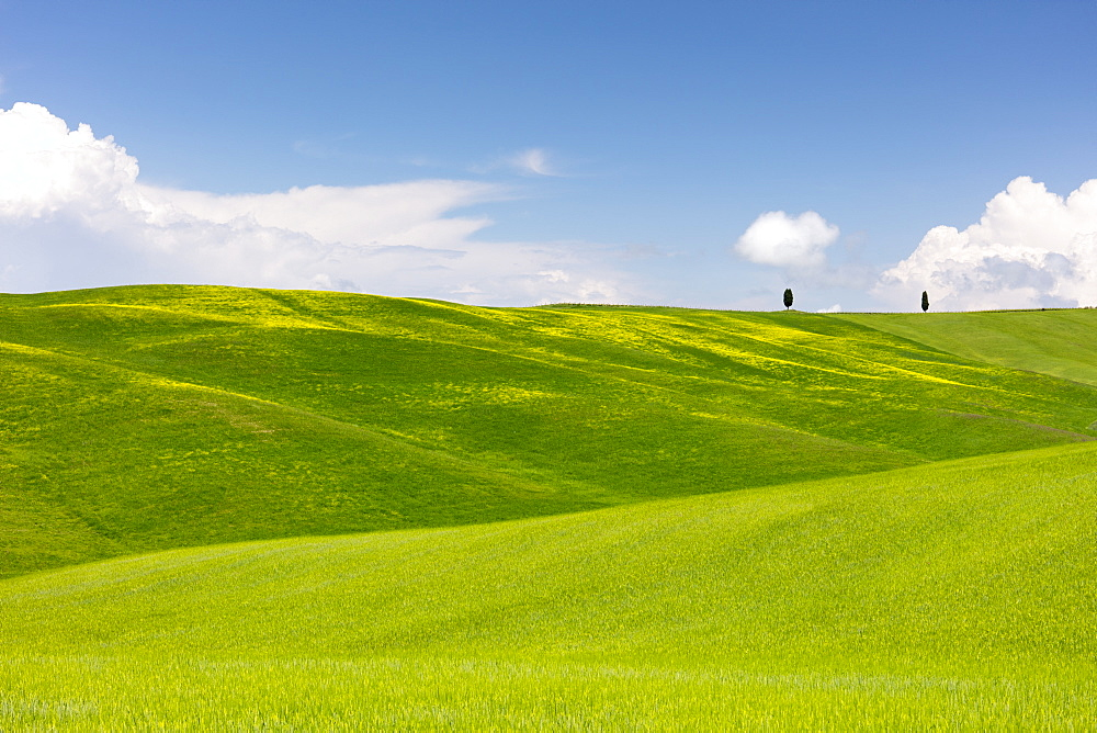 Green fields, Cypress trees and blue sky in Val d'Orcia, UNESCO World Heritage Site, Tuscany, Italy, Europe - 1284-115