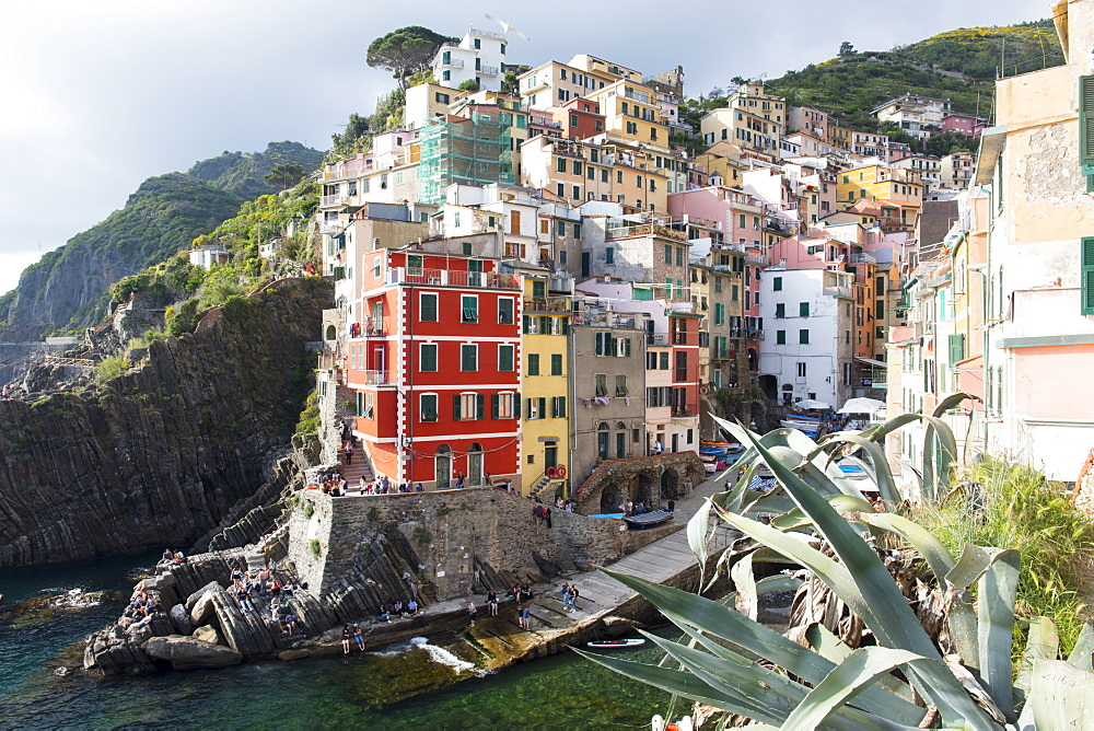 Colourful buildings by sea, Riomaggiore, Cinque Terre, UNESCO World Heritage Site, Liguria, Italy, Europe - 1284-140