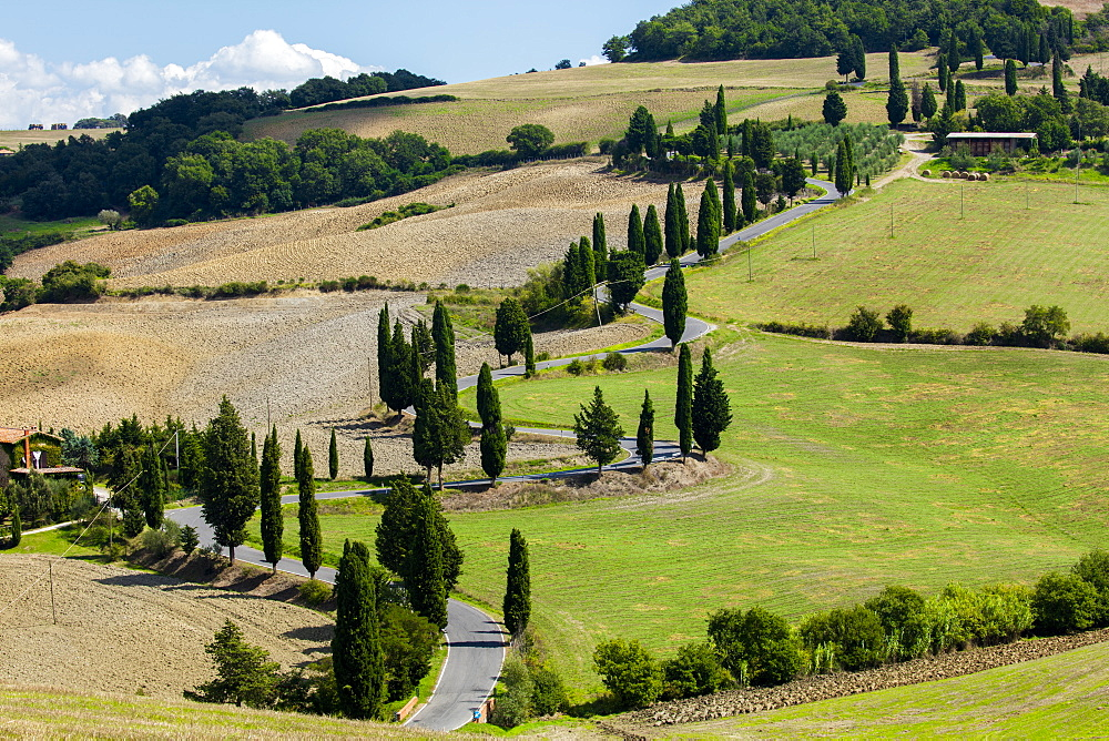 Winding Tuscan road surrounded by fields and Cypress trees, near La Foce, Tuscany, Italy, Europe