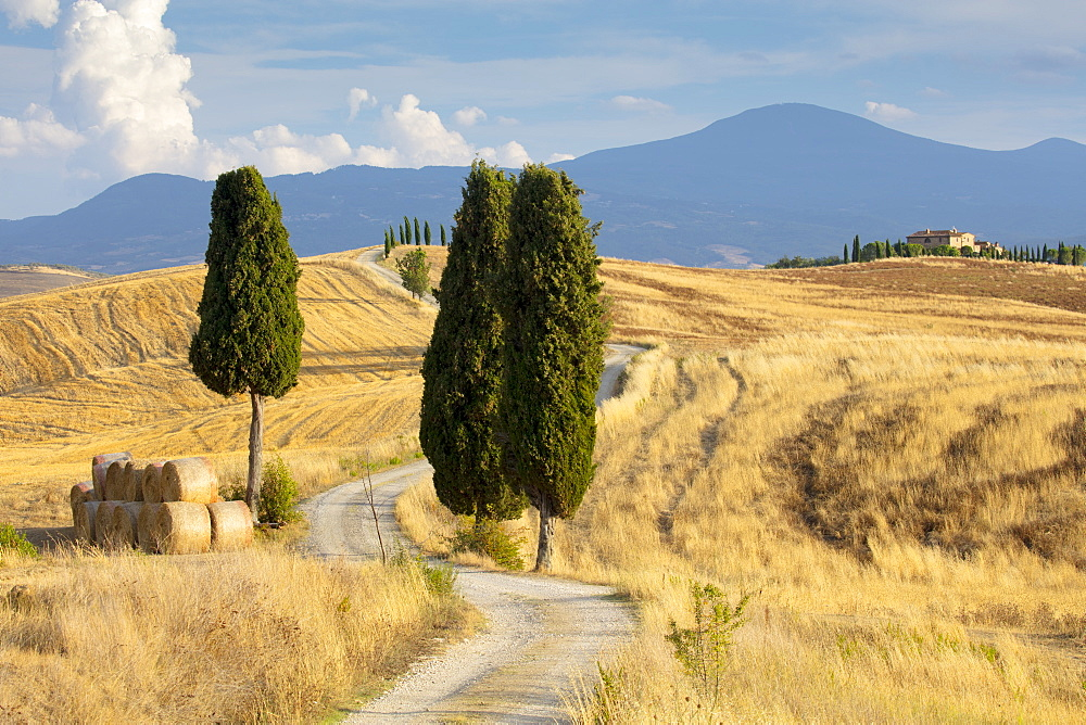 Cypress trees and fields in the afternoon sun at Agriturismo Terrapille (Gladiator Villa) near Pienza in Tuscany, Italy, Europe - 1284-56