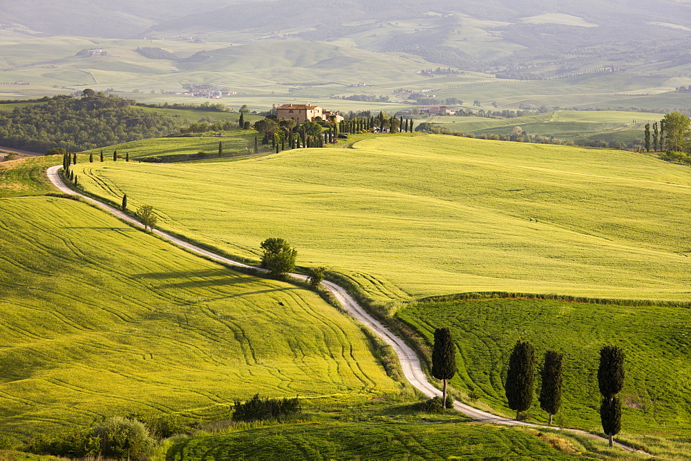 Cypress trees and green fields in the afternoon sun at Agriturismo Terrapille (Gladiator Villa) near Pienza in Tuscany, Italy, Europe