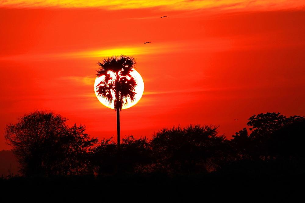 Sunset, Bagan, Myanmar (Burma), Asia