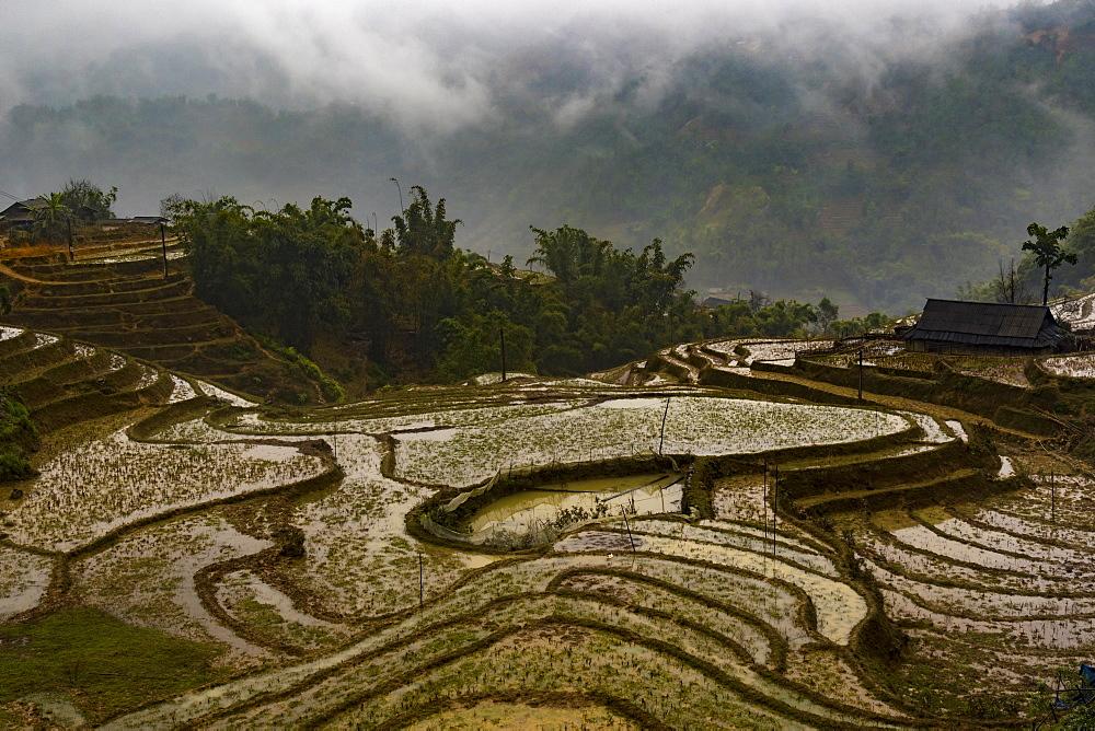 Sapa, Vietnam, Indochina, Southeast Asia, Asia - 1285-9